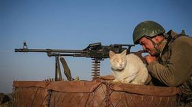 Hainler sürüsü PKK'ya yönelik süren operasyon sırasında bir mağarada bulunan kediler Mehmetçiğin 'can dostu' oldu