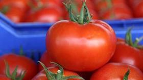 Rusya'ya domates ihracatı ile ilgili bakanlıktan çok önemli açıklama