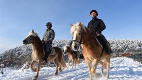Uludağ'ın karlı eteklerinde atla gezinti turizmi