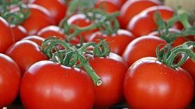 Konserve domatese ithalat yolu açıldı
