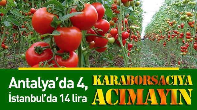 Antalya'da 4 İstanbul'da 14 lira