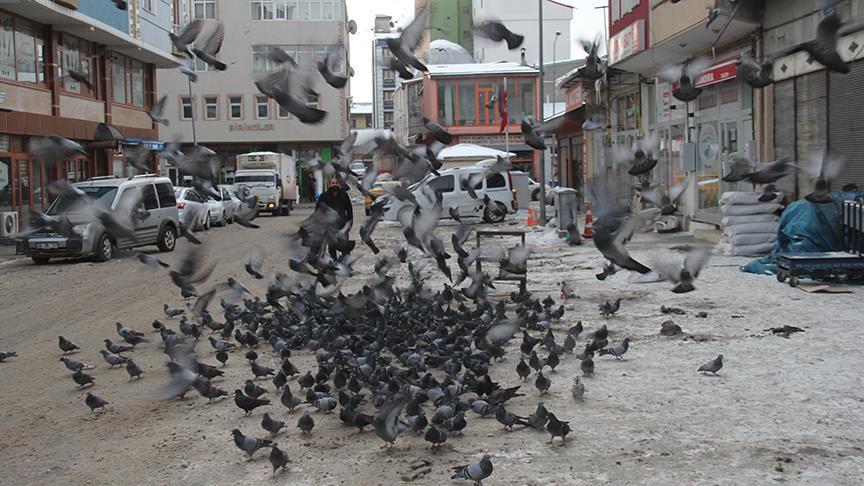 Zahirecilerin ilk müşterileri güvercinler