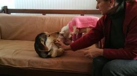 Bursa'da bir köpek felçli kuzunun süt annesi oldu