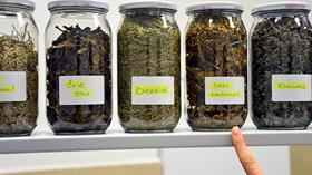 Gıda ve ilaç sanayine etken madde üretiyorlar