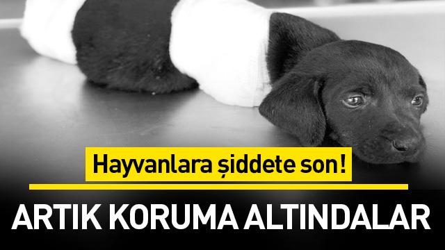 Hayvanlara şiddete son! Artık koruma altındalar
