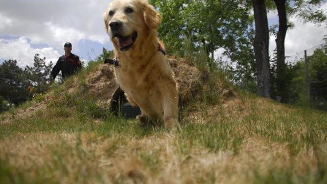 Tahranda köpek gezdirmek artık yasak 56