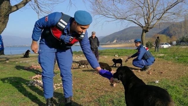 Mehmetçik'ten hayvanlara yemek