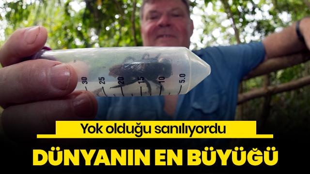 Dünyanın en büyük arısı ortaya çıktı