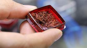 Yerli saf safranın kilosu 30 bin TL'den satılıyor