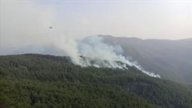 Faili meçhul yangınlar ormanları kül etti