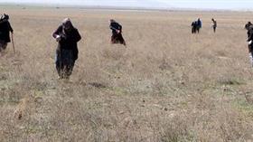 Dolaman mantarı toplamak için bastonunu alan araziye koşuyor