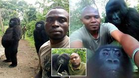 Korumalarıyla selfie çektiren goriller sosyal medyada büyük ilgi gördü