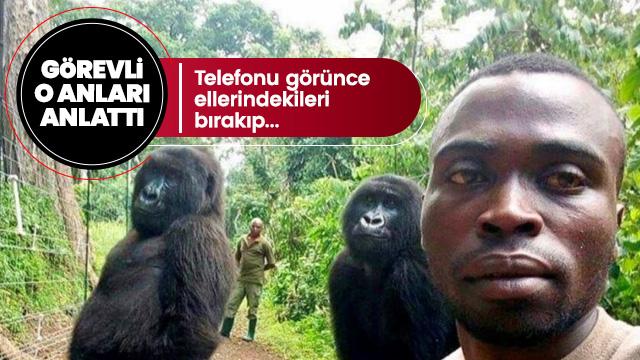 Gorillerle selfie çeken görevli o anları anlattı