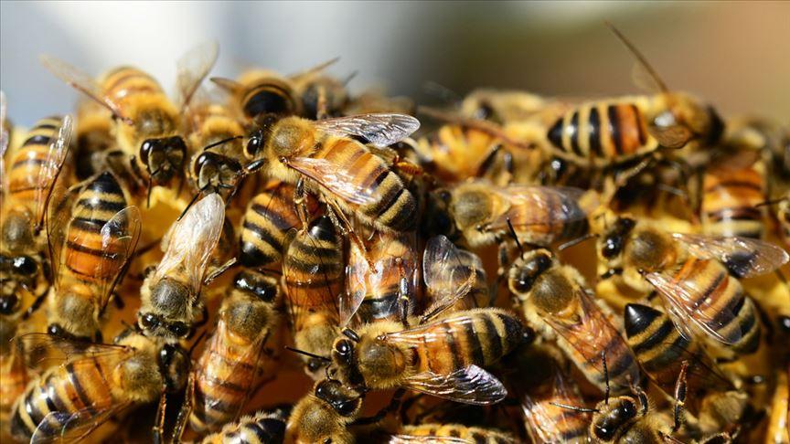 Şehir merkezinde firari arı paniğe yol açtı